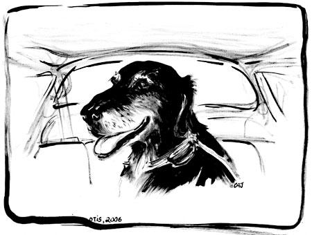 dog drawing by carolita johnson
