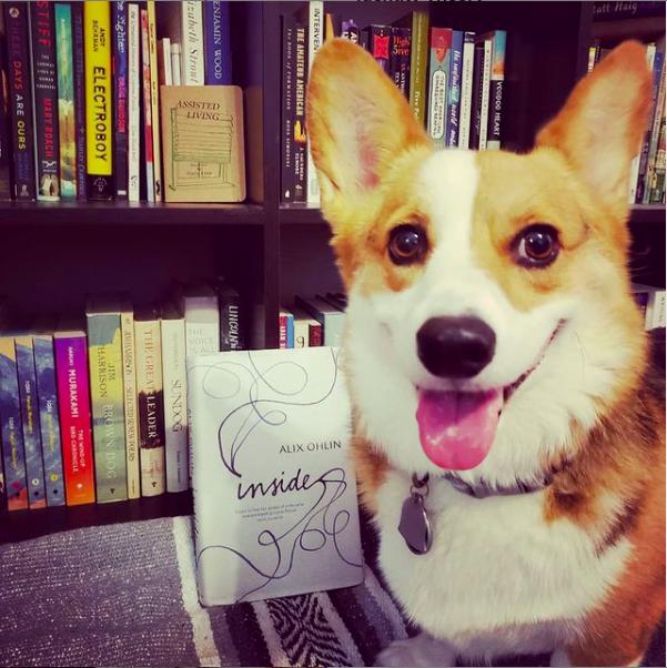 A corgi in front of a bookshelf